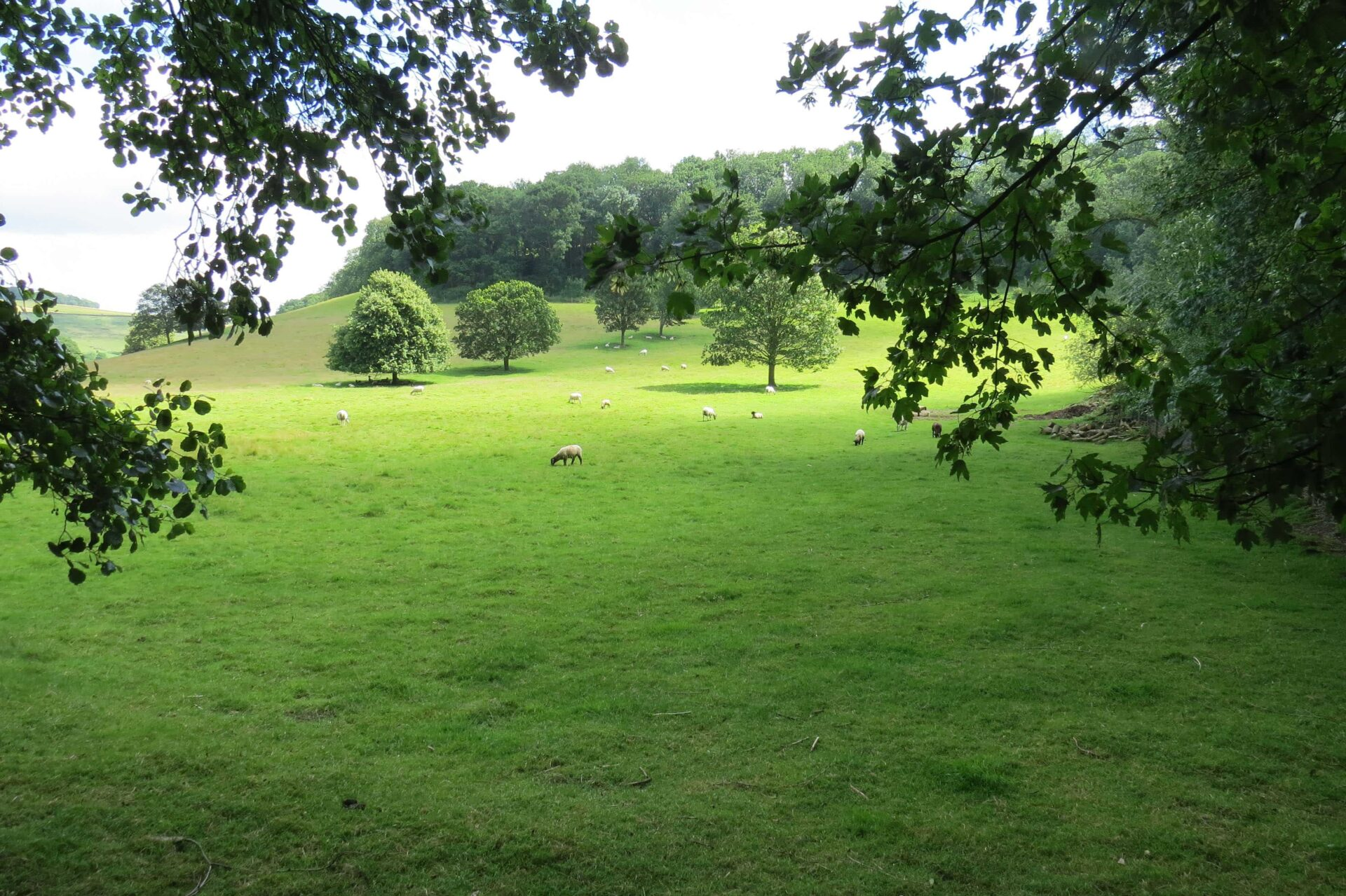 Research_Yorkshire Thornton le Dale_Meadow-min